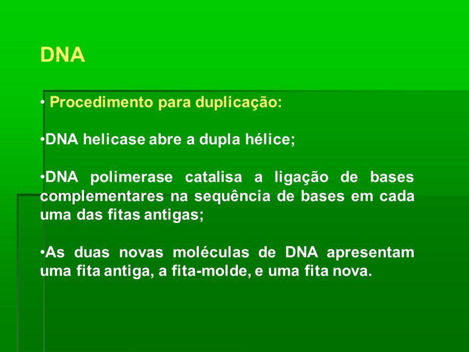 DNA Procedimento para duplicação: DNA helicase abre a dupla hélice; DNA polimerase catalisa a ligação de bases complementares na sequência de bases em