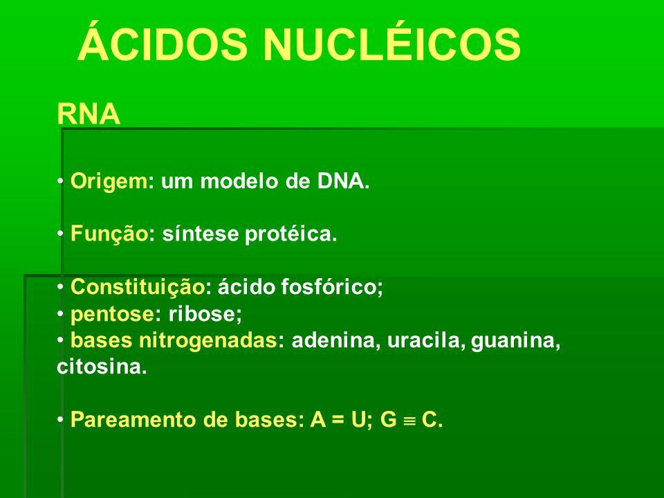 ÁCIDOS NUCLÉICOS RNA Origem: um modelo de DNA. Função: síntese protéica. Constituição: ácido fosfórico; pentose: ribose; bases nitrogenadas: adenina,