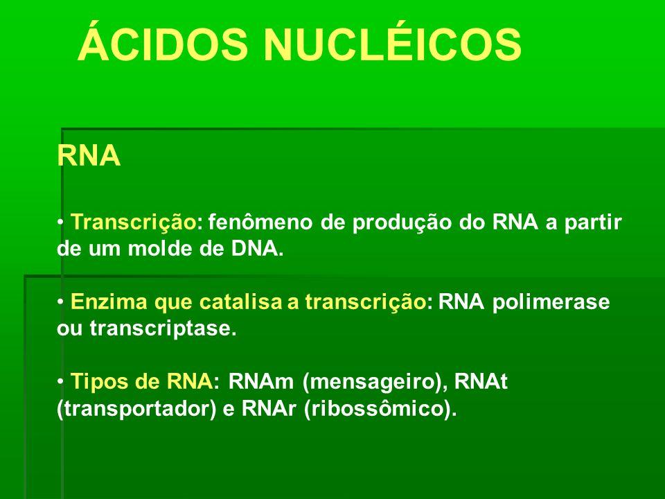 ÁCIDOS NUCLÉICOS RNA Transcrição: fenômeno de produção do RNA a partir de um molde de DNA. Enzima que catalisa a transcrição: RNA polimerase ou transc