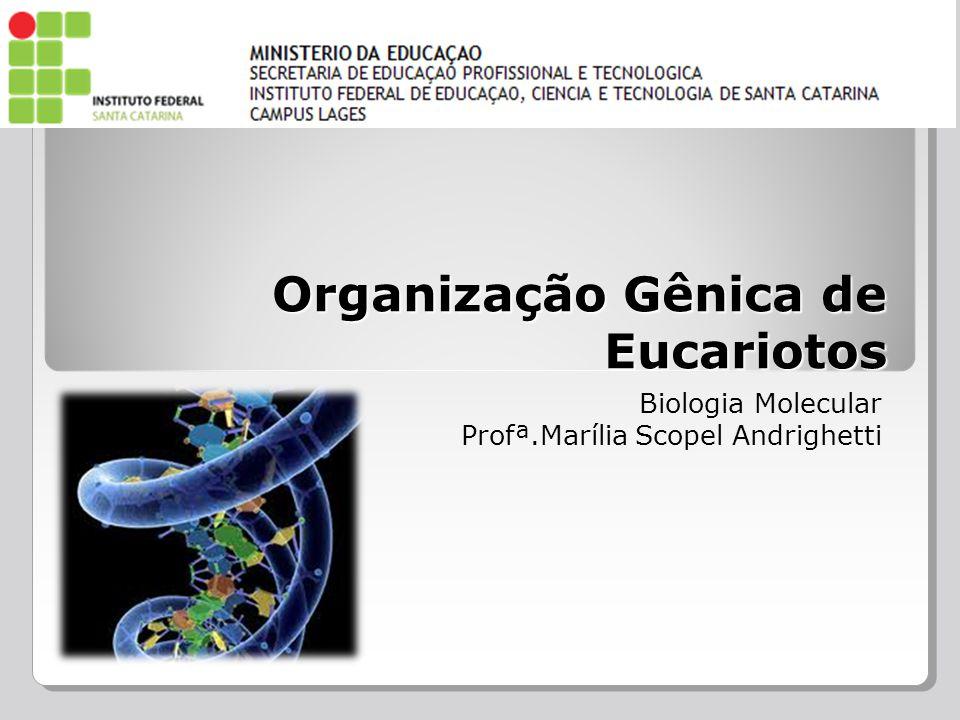 Organização Gênica de Eucariotos Biologia Molecular Profª.Marília Scopel Andrighetti