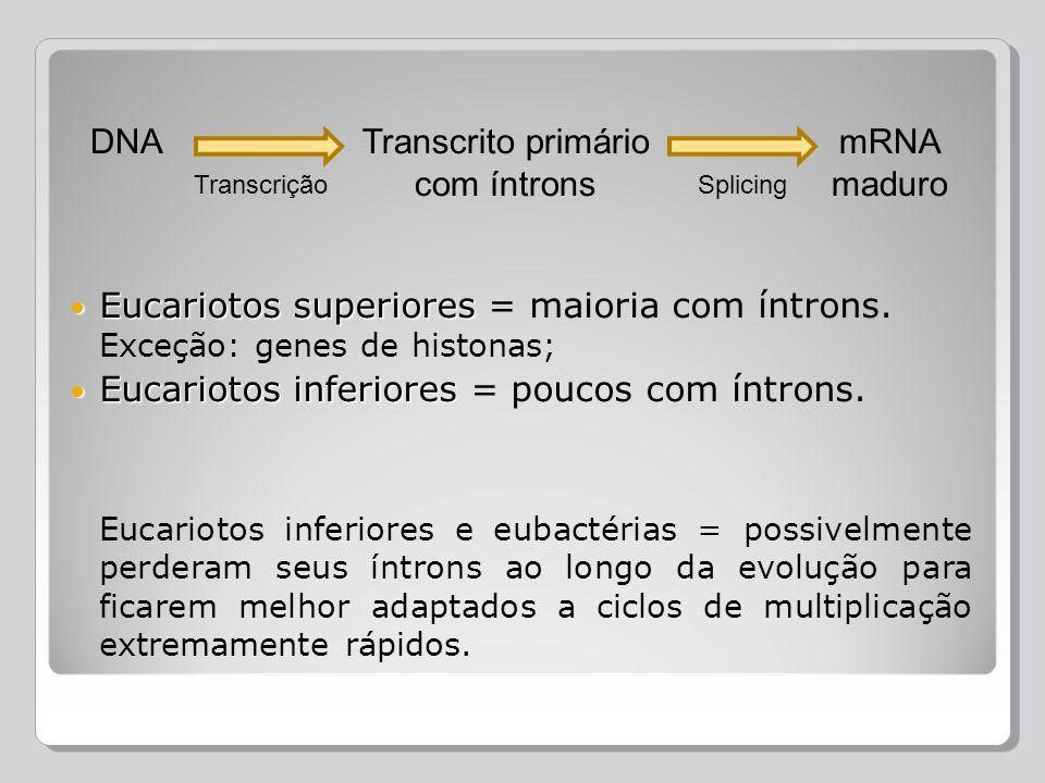 DNA Transcrição Transcrito primário com íntrons Splicing mRNA maduro Eucariotos superiores Eucariotos superiores = maioria com íntrons. Exceção: genes
