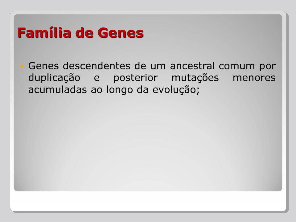 Genes descendentes de um ancestral comum por duplicação e posterior mutações menores acumuladas ao longo da evolução; Família de Genes