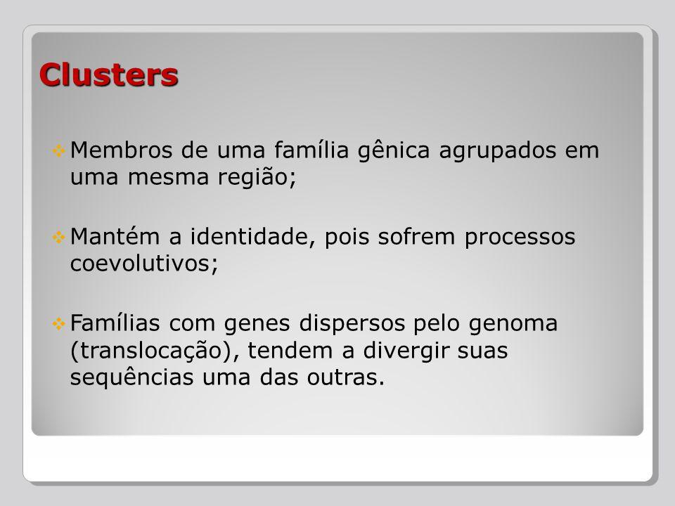 Membros de uma família gênica agrupados em uma mesma região; Mantém a identidade, pois sofrem processos coevolutivos; Famílias com genes dispersos pel