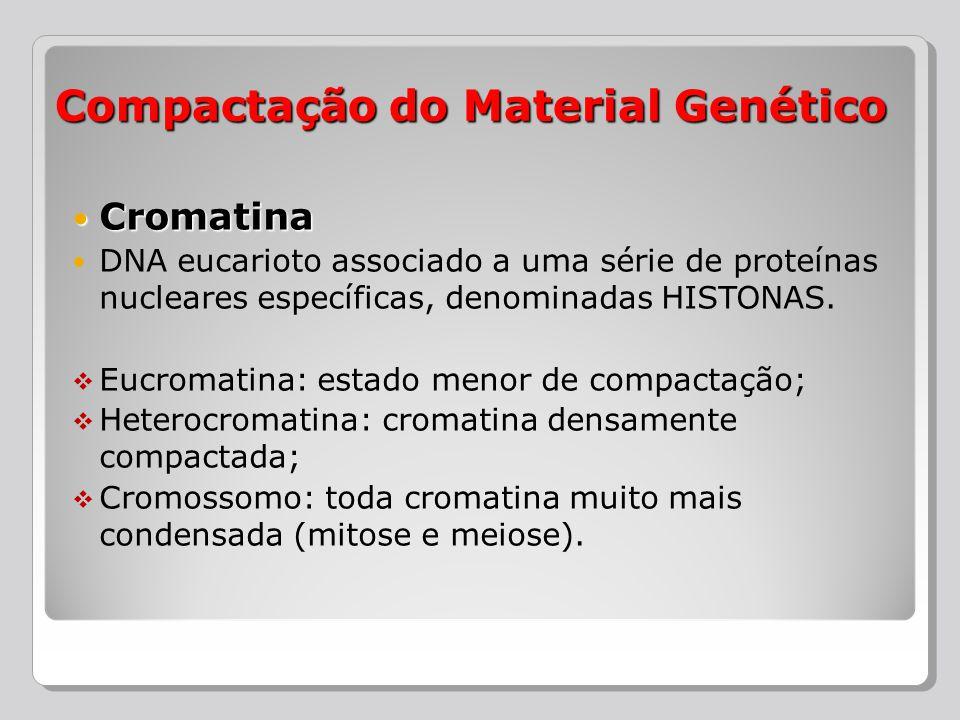 Cromatina Cromatina DNA eucarioto associado a uma série de proteínas nucleares específicas, denominadas HISTONAS. Eucromatina: estado menor de compact