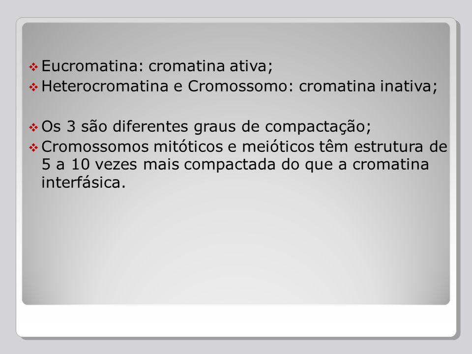 Eucromatina: cromatina ativa; Heterocromatina e Cromossomo: cromatina inativa; Os 3 são diferentes graus de compactação; Cromossomos mitóticos e meiót