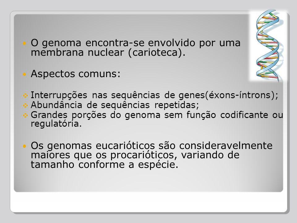 O genoma encontra-se envolvido por uma membrana nuclear (carioteca). Aspectos comuns: Interrupções nas sequências de genes(éxons-íntrons); Abundância