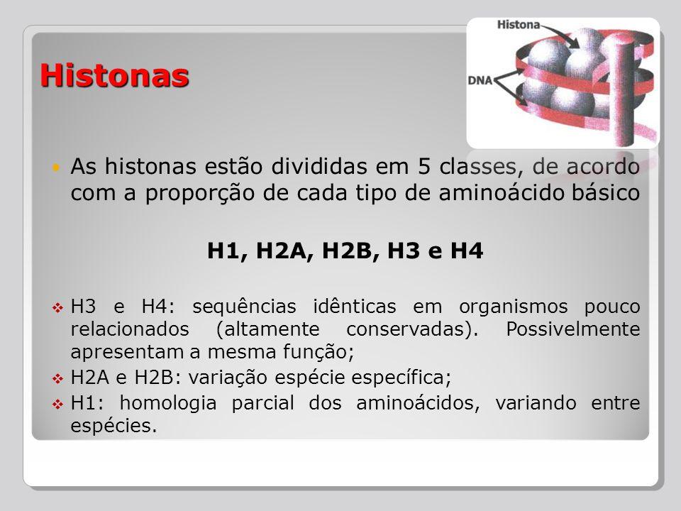 As histonas estão divididas em 5 classes, de acordo com a proporção de cada tipo de aminoácido básico H1, H2A, H2B, H3 e H4 H3 e H4: sequências idênti