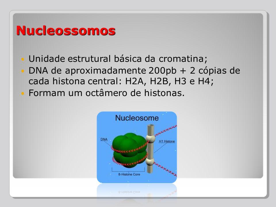 Unidade estrutural básica da cromatina; DNA de aproximadamente 200pb + 2 cópias de cada histona central: H2A, H2B, H3 e H4; Formam um octâmero de hist