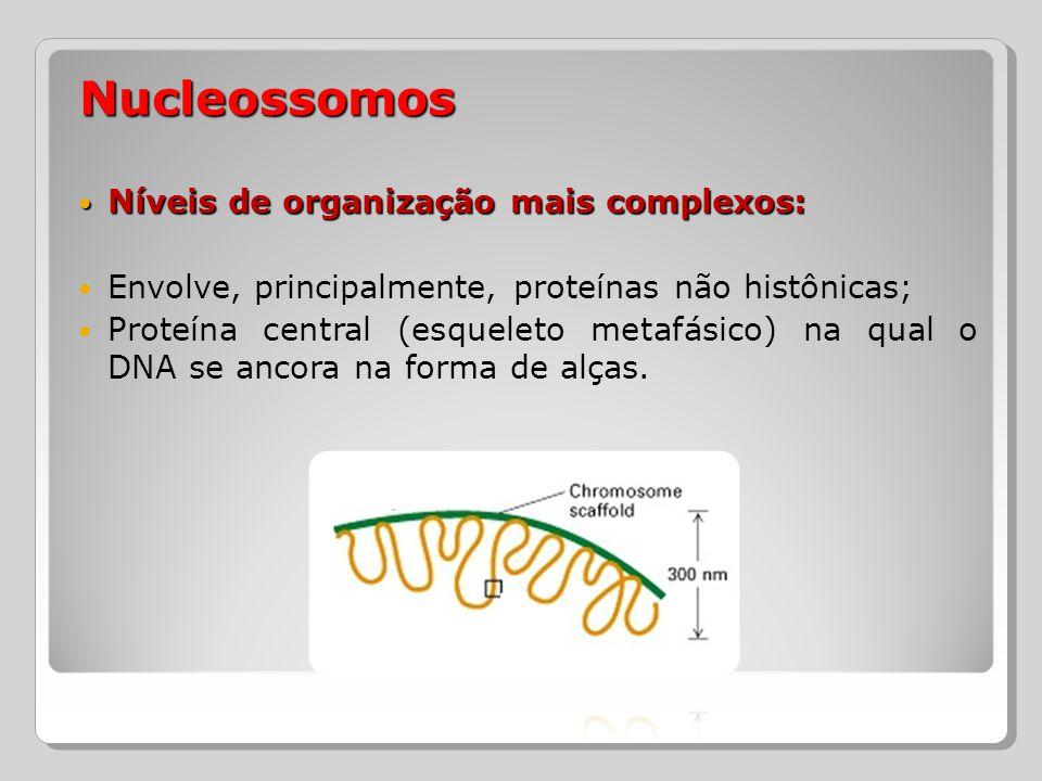 Níveis de organização mais complexos: Níveis de organização mais complexos: Envolve, principalmente, proteínas não histônicas; Proteína central (esque