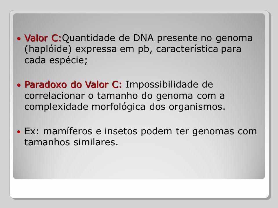 Valor C: Valor C:Quantidade de DNA presente no genoma (haplóide) expressa em pb, característica para cada espécie; Paradoxo do Valor C: Paradoxo do Va