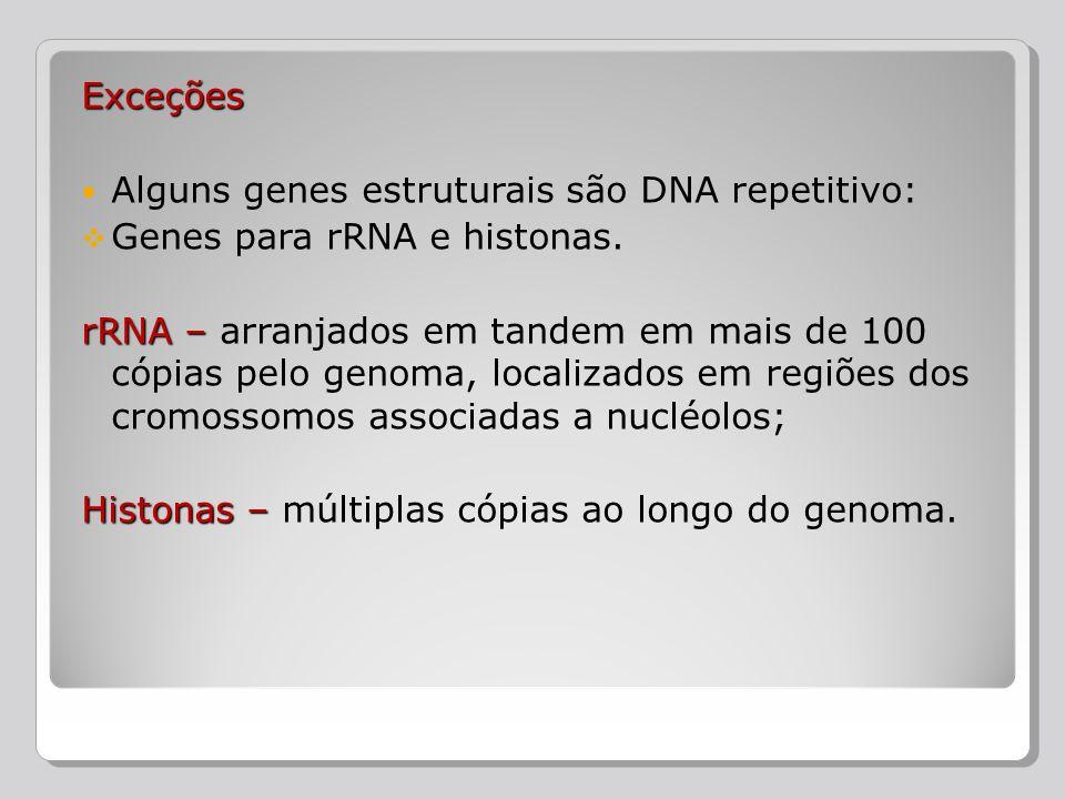 Exceções Alguns genes estruturais são DNA repetitivo: Genes para rRNA e histonas. rRNA– rRNA – arranjados em tandem em mais de 100 cópias pelo genoma,