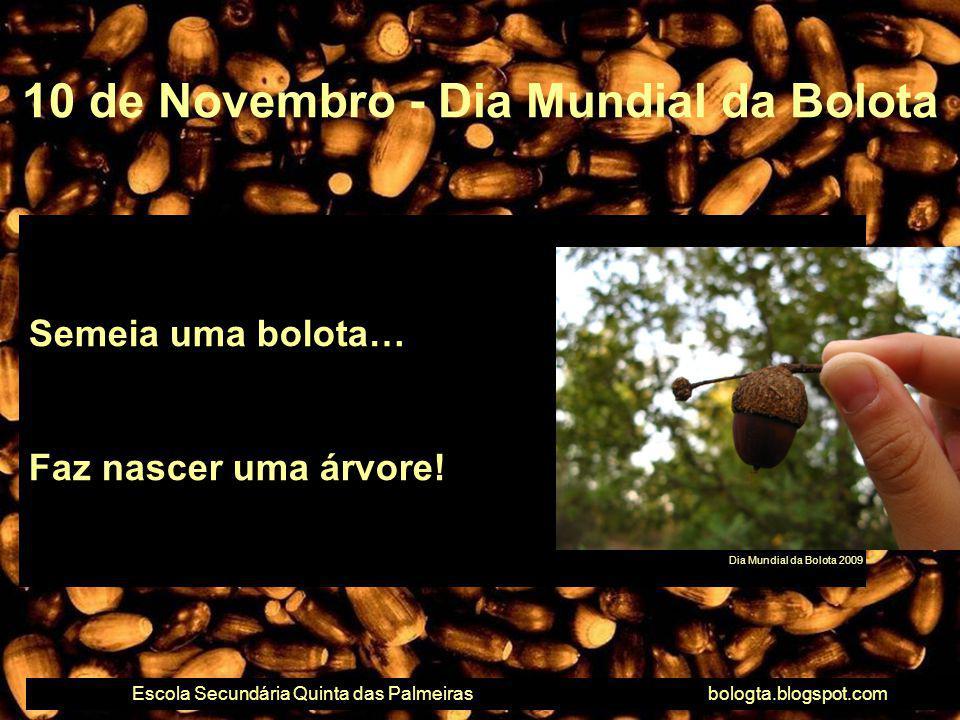 Semeia uma bolota… Faz nascer uma árvore! 10 de Novembro - Dia Mundial da Bolota Escola Secundária Quinta das Palmeirasbologta.blogspot.com Dia Mundia