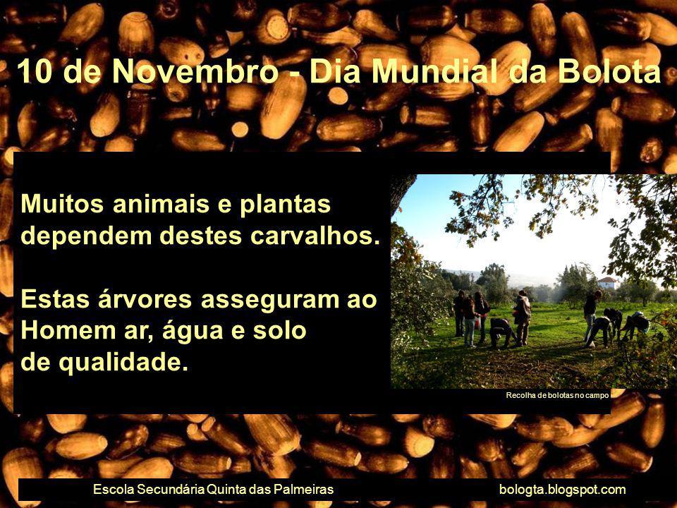 Muitos animais e plantas dependem destes carvalhos. Estas árvores asseguram ao Homem ar, água e solo de qualidade. 10 de Novembro - Dia Mundial da Bol