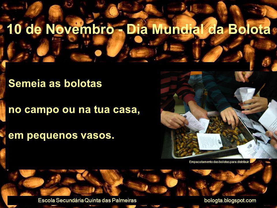 Semeia as bolotas no campo ou na tua casa, em pequenos vasos. 10 de Novembro - Dia Mundial da Bolota Escola Secundária Quinta das Palmeirasbologta.blo