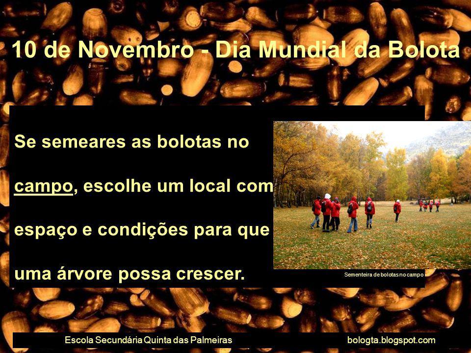 Se semeares as bolotas no campo, escolhe um local com espaço e condições para que uma árvore possa crescer. 10 de Novembro - Dia Mundial da Bolota Esc