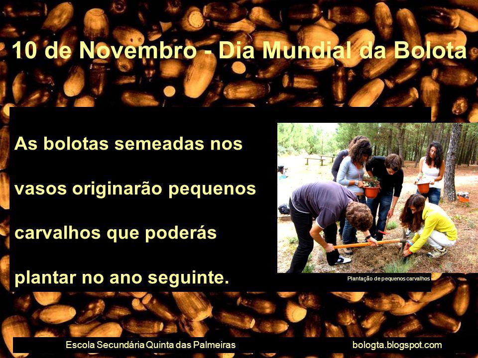 As bolotas semeadas nos vasos originarão pequenos carvalhos que poderás plantar no ano seguinte. 10 de Novembro - Dia Mundial da Bolota Escola Secundá