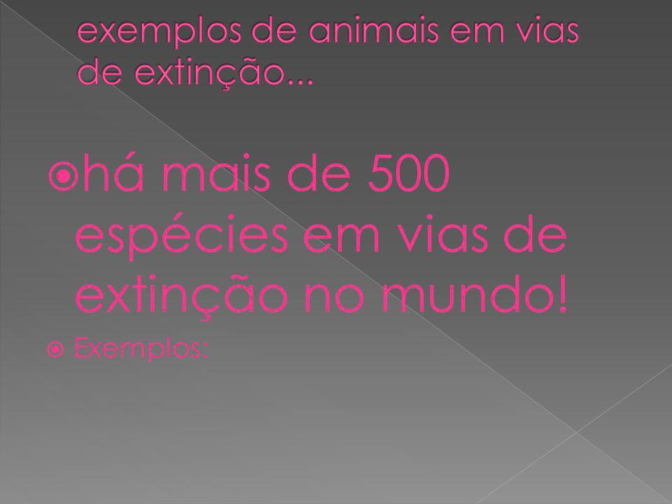 há mais de 500 espécies em vias de extinção no mundo! Exemplos: