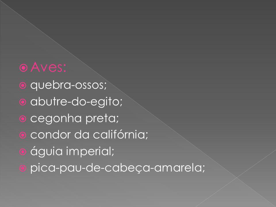 Aves: quebra-ossos; abutre-do-egito; cegonha preta; condor da califórnia; águia imperial; pica-pau-de-cabeça-amarela;