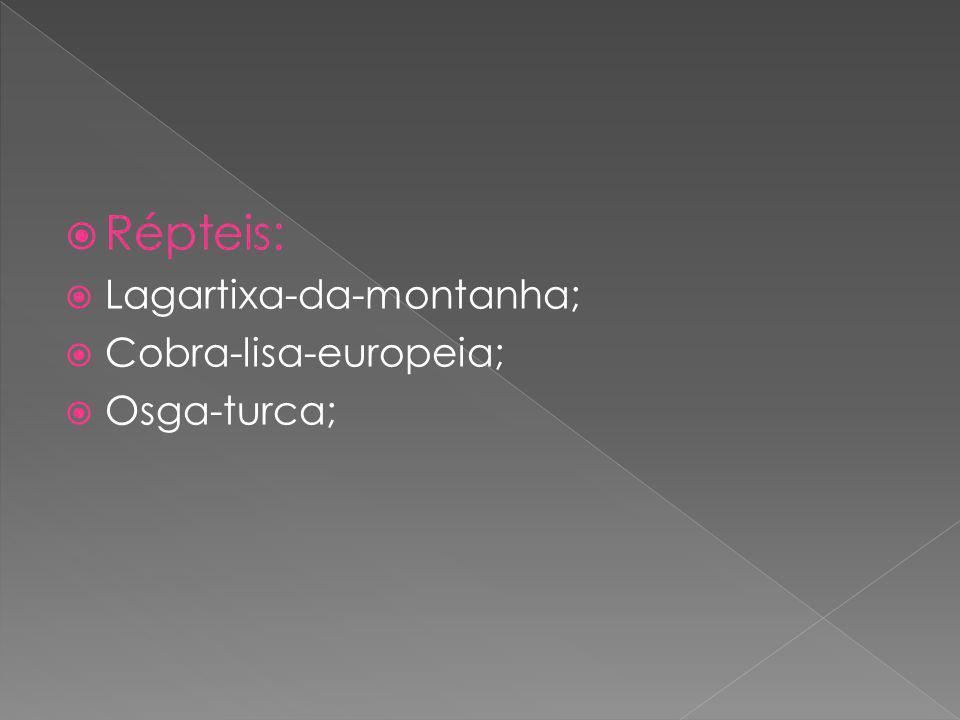 Répteis: Lagartixa-da-montanha; Cobra-lisa-europeia; Osga-turca;