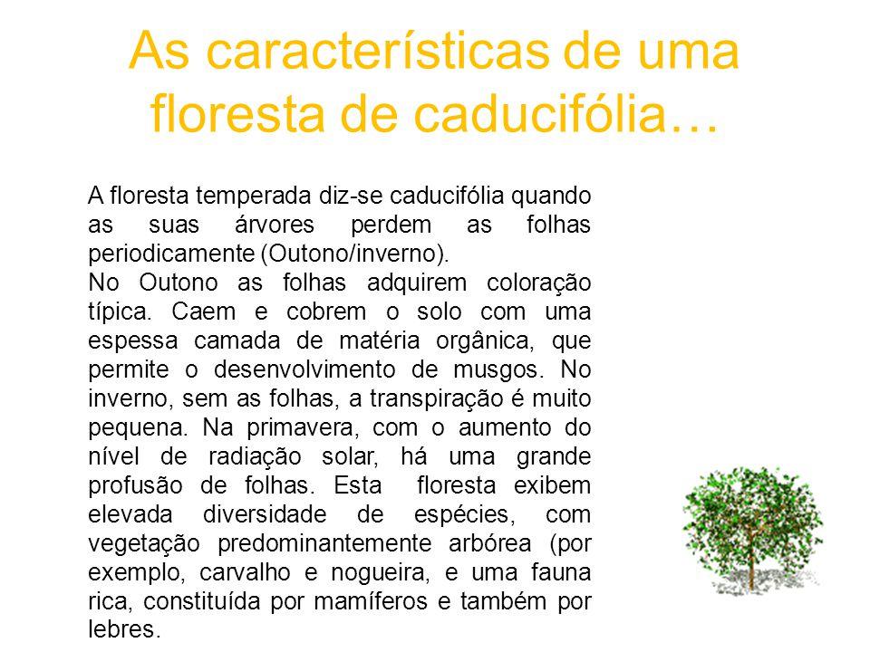 As características de uma floresta de caducifólia… A floresta temperada diz-se caducifólia quando as suas árvores perdem as folhas periodicamente (Out