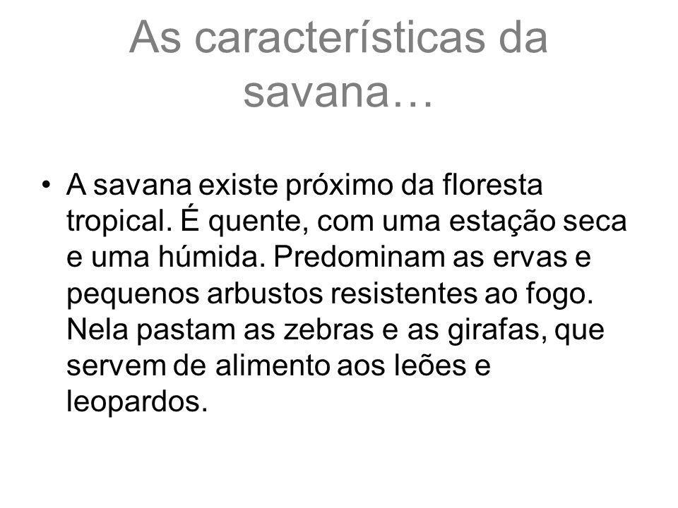 As características da savana… A savana existe próximo da floresta tropical. É quente, com uma estação seca e uma húmida. Predominam as ervas e pequeno