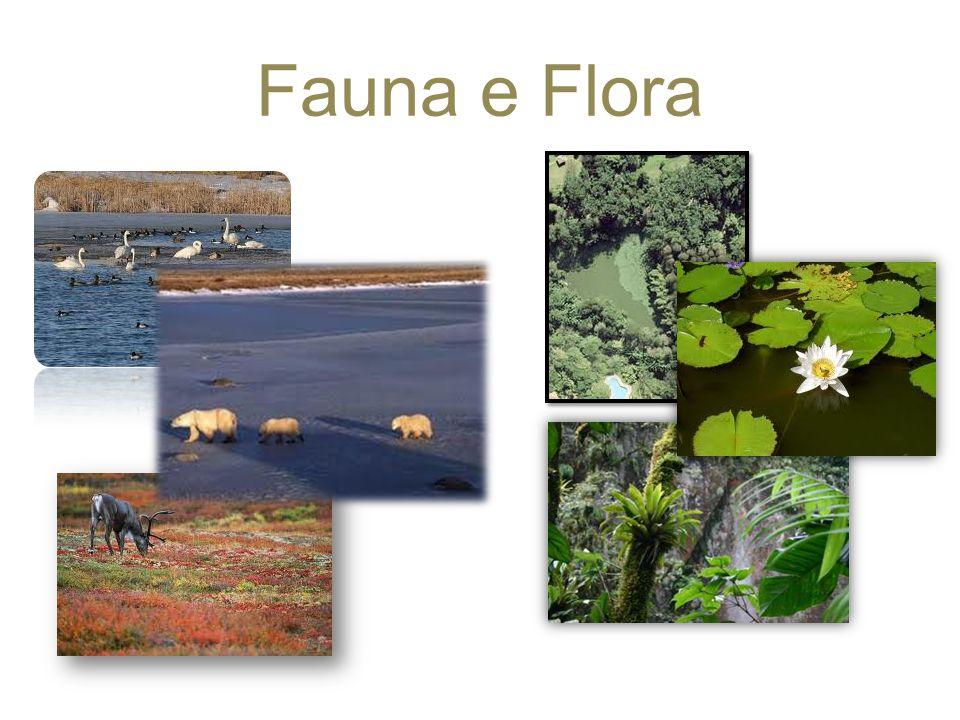 O que é a Flora e a Fauna A flora retrata sobre as plantas e como é que estas se desenvolvem ao longo do tempo.