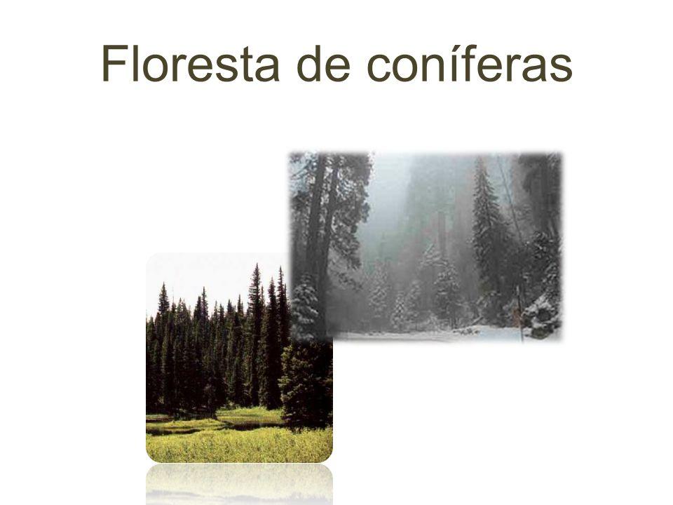 Características da floresta de coníferas… A taiga ou floresta de coníferas só existe no hemisfério norte.