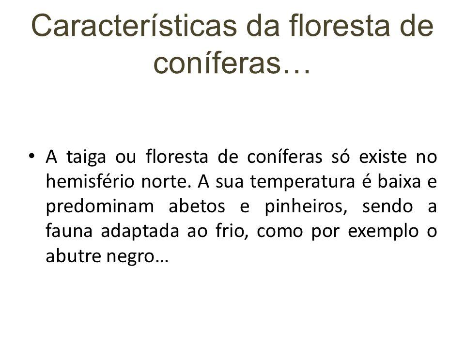 Características da floresta de coníferas… A taiga ou floresta de coníferas só existe no hemisfério norte. A sua temperatura é baixa e predominam abeto