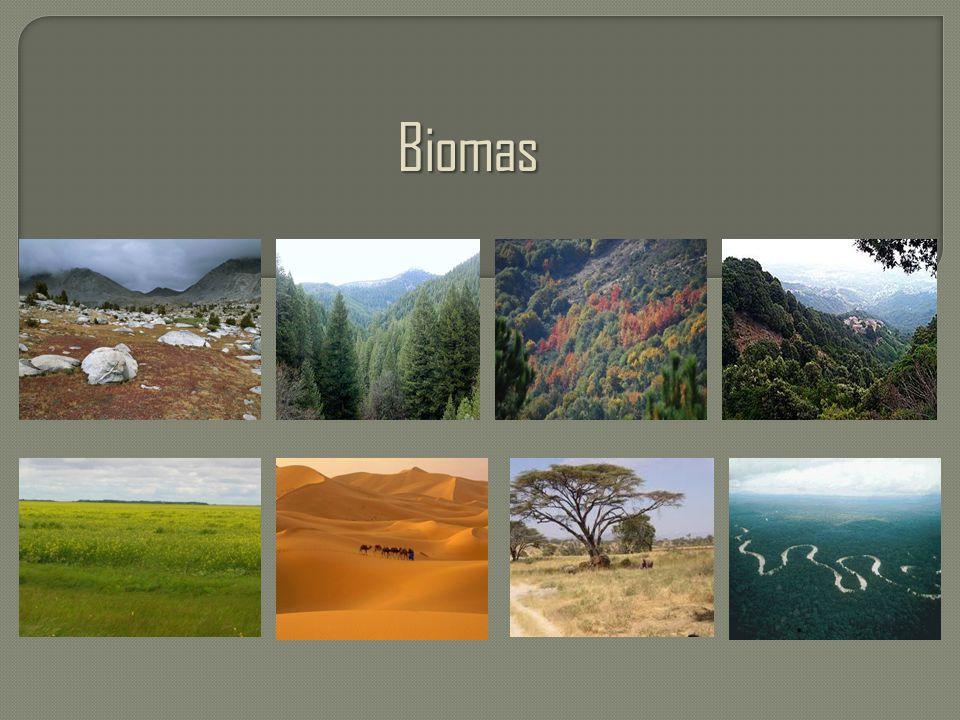 Biomas Biomas.