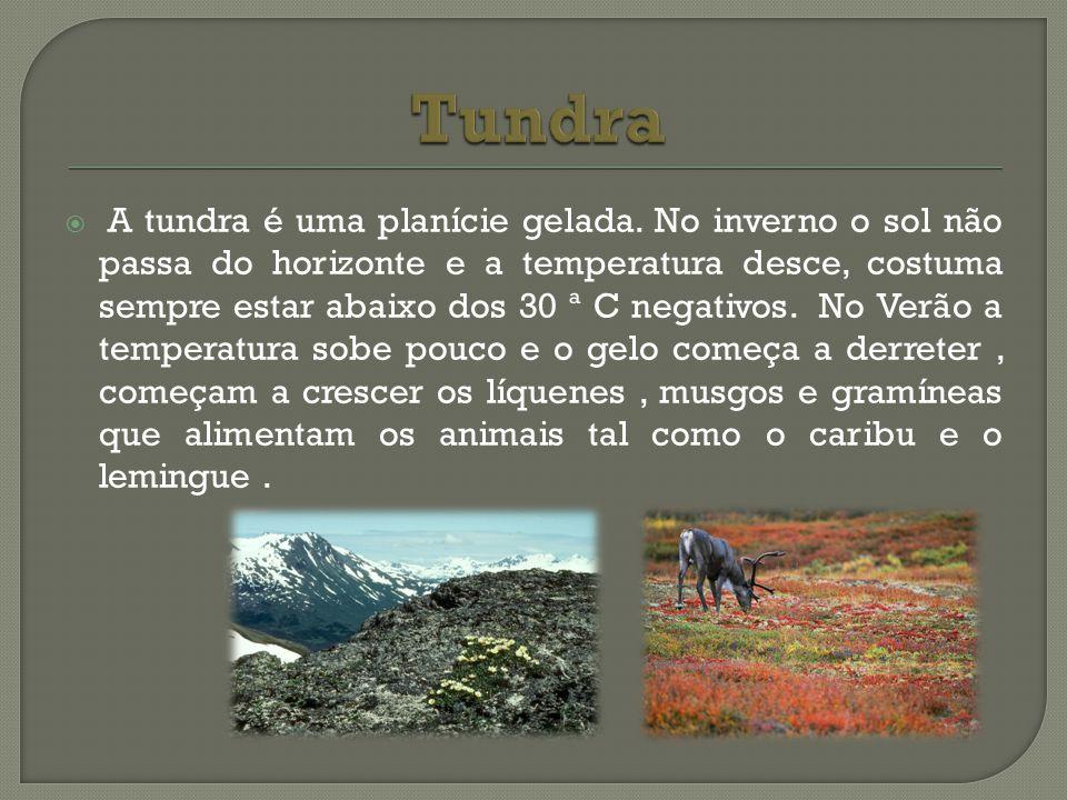 A tundra é uma planície gelada. No inverno o sol não passa do horizonte e a temperatura desce, costuma sempre estar abaixo dos 30 ª C negativos. No Ve