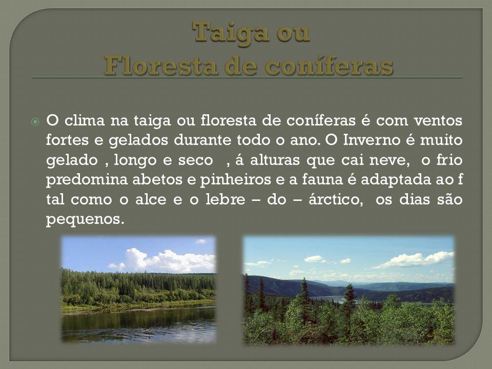 O clima na taiga ou floresta de coníferas é com ventos fortes e gelados durante todo o ano. O Inverno é muito gelado, longo e seco, á alturas que cai