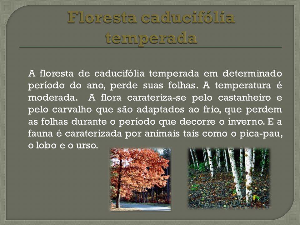 A floresta de caducifólia temperada em determinado período do ano, perde suas folhas. A temperatura é moderada. A flora carateriza-se pelo castanheiro