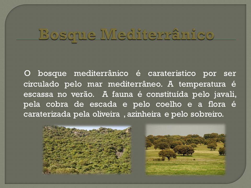 O bosque mediterrânico é carateristico por ser circulado pelo mar mediterrâneo. A temperatura é escassa no verão. A fauna é constituída pelo javali, p