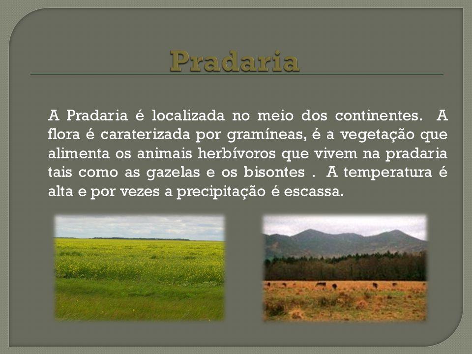 A Pradaria é localizada no meio dos continentes. A flora é caraterizada por gramíneas, é a vegetação que alimenta os animais herbívoros que vivem na p