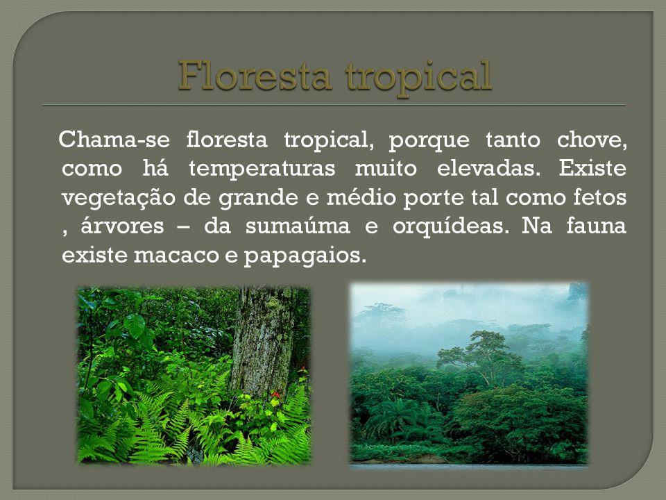 Chama-se floresta tropical, porque tanto chove, como há temperaturas muito elevadas. Existe vegetação de grande e médio porte tal como fetos, árvores