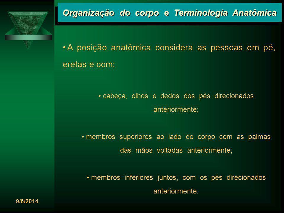 9/6/2014 Organização do corpo e Terminologia Anatômica A posição anatômica considera as pessoas em pé, eretas e com: cabeça, olhos e dedos dos pés dir