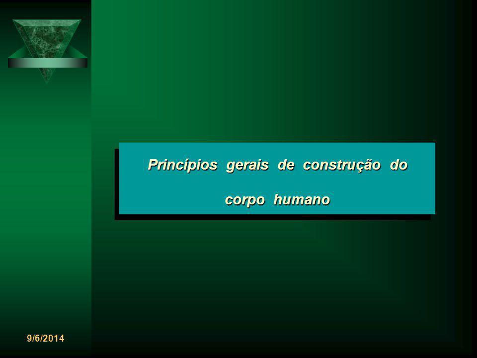 9/6/2014 Princípios gerais de construção do corpo humano