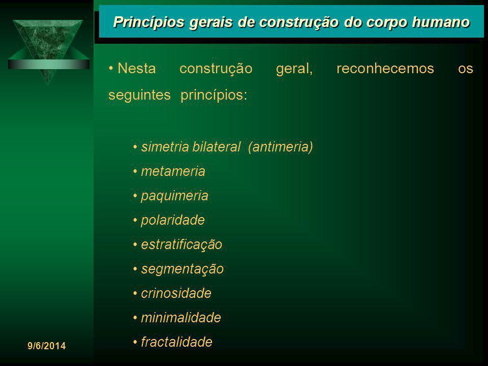 9/6/2014 Princípios gerais de construção do corpo humano Nesta construção geral, reconhecemos os seguintes princípios: simetria bilateral (antimeria)