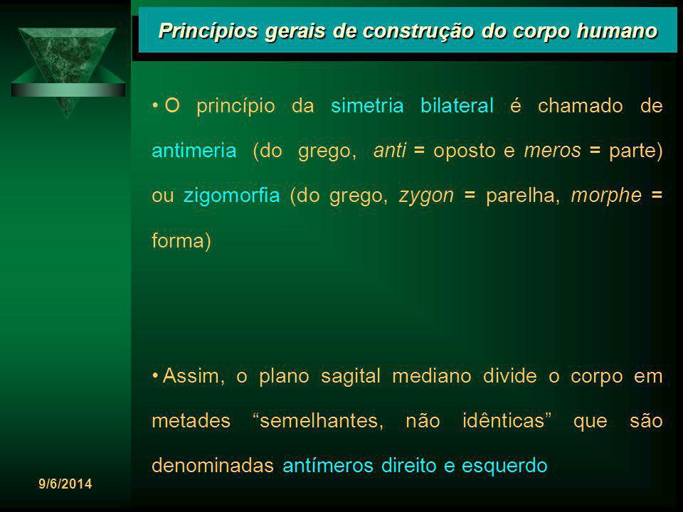 9/6/2014 Princípios gerais de construção do corpo humano O princípio da simetria bilateral é chamado de antimeria (do grego, anti = oposto e meros = p