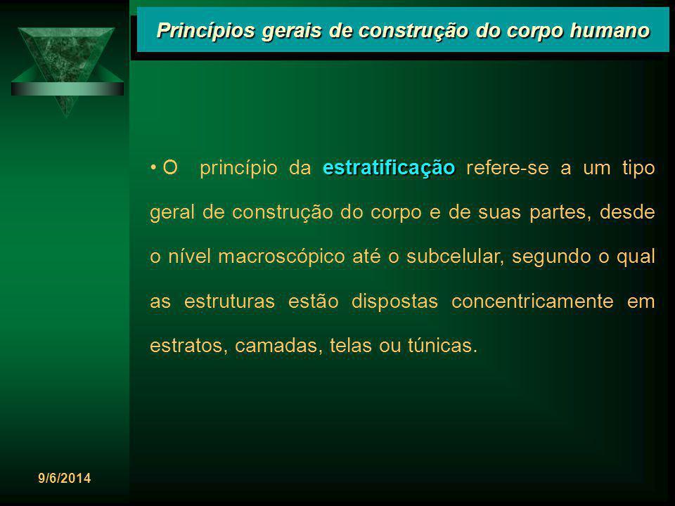 9/6/2014 Princípios gerais de construção do corpo humano estratificação O princípio da estratificação refere-se a um tipo geral de construção do corpo