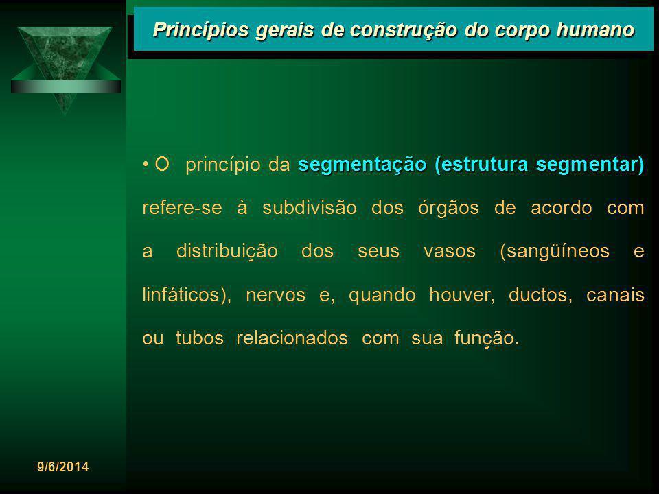 9/6/2014 Princípios gerais de construção do corpo humano segmentação (estrutura segmentar) O princípio da segmentação (estrutura segmentar) refere-se