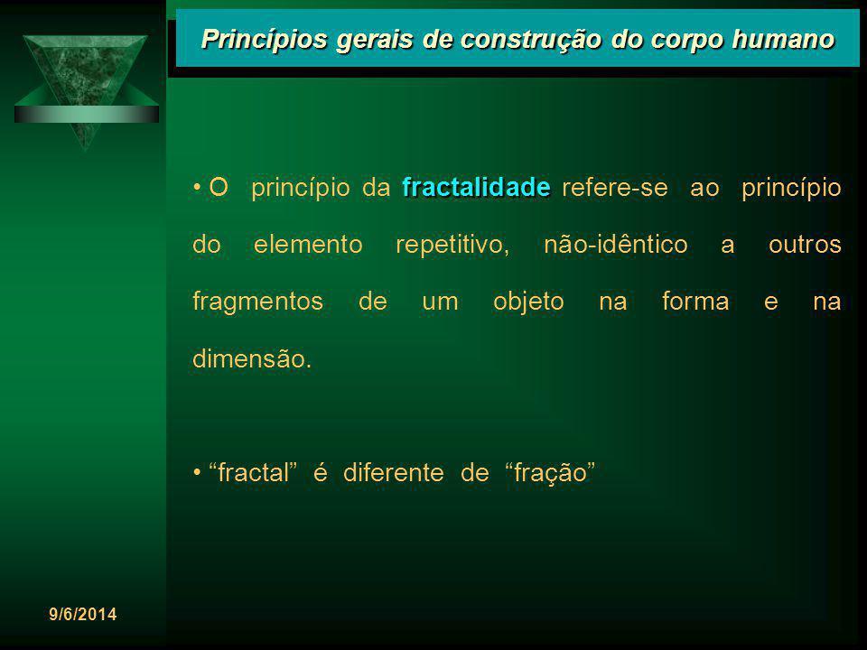 9/6/2014 Princípios gerais de construção do corpo humano fractalidade O princípio da fractalidade refere-se ao princípio do elemento repetitivo, não-i
