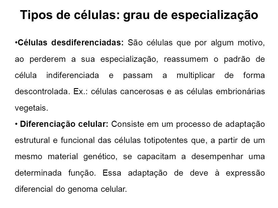 Tipos de células: grau de especialização Células desdiferenciadas: São células que por algum motivo, ao perderem a sua especialização, reassumem o padrão de célula indiferenciada e passam a multiplicar de forma descontrolada.