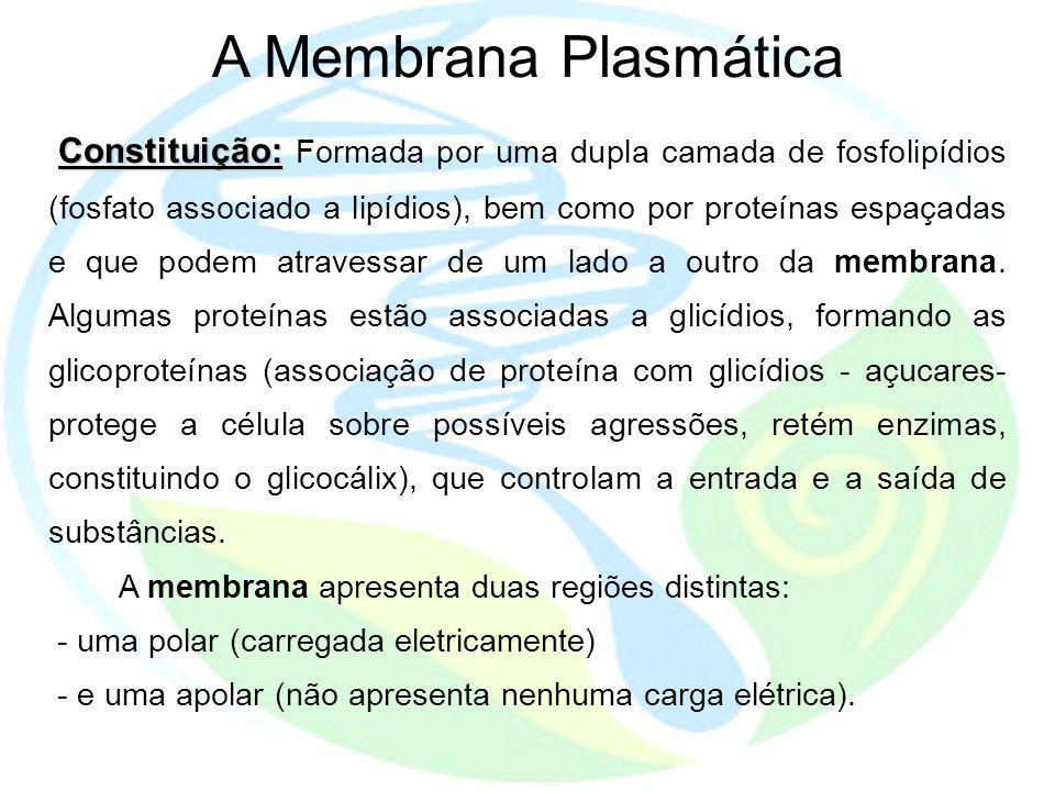 A Membrana Plasmática Constituição: Constituição: Formada por uma dupla camada de fosfolipídios (fosfato associado a lipídios), bem como por proteínas espaçadas e que podem atravessar de um lado a outro da membrana.