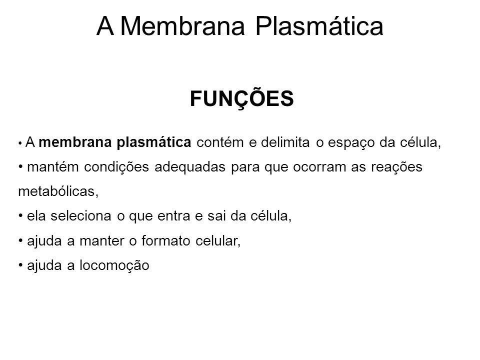 FUNÇÕES A membrana plasmática contém e delimita o espaço da célula, mantém condições adequadas para que ocorram as reações metabólicas, ela seleciona o que entra e sai da célula, ajuda a manter o formato celular, ajuda a locomoção A Membrana Plasmática