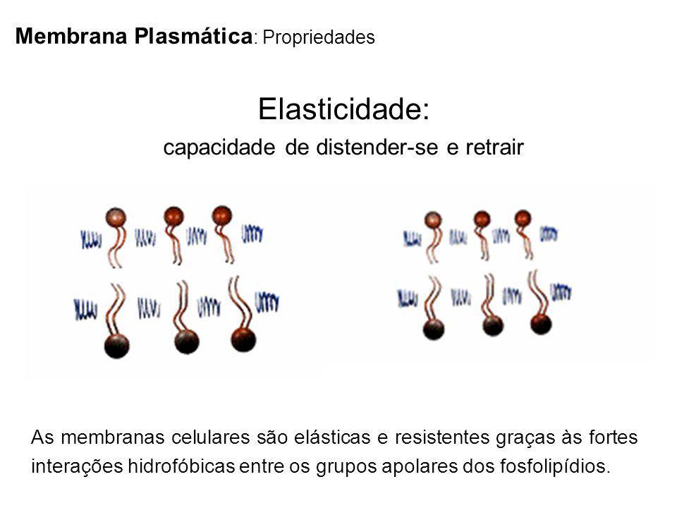 Membrana Plasmática : Propriedades As membranas celulares são elásticas e resistentes graças às fortes interações hidrofóbicas entre os grupos apolare