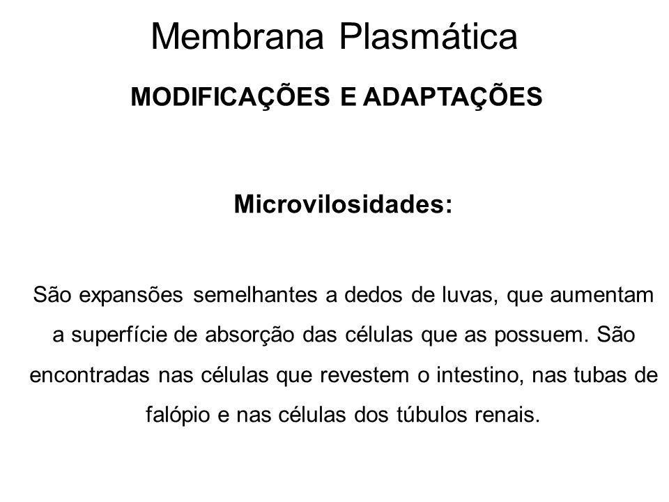 Membrana Plasmática MODIFICAÇÕES E ADAPTAÇÕES Microvilosidades: São expansões semelhantes a dedos de luvas, que aumentam a superfície de absorção das células que as possuem.