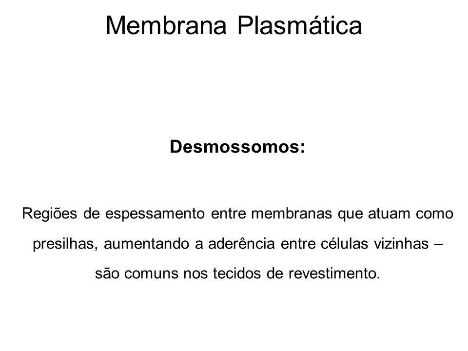 Membrana Plasmática Desmossomos: Regiões de espessamento entre membranas que atuam como presilhas, aumentando a aderência entre células vizinhas – são