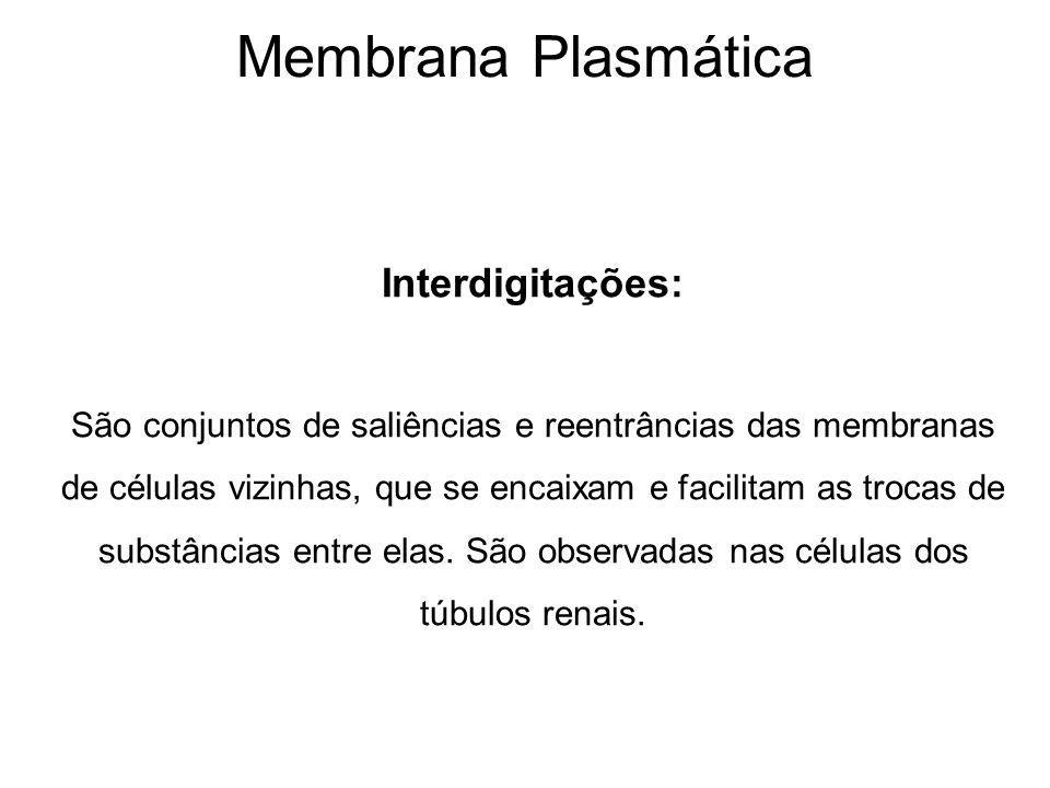 Membrana Plasmática Interdigitações: São conjuntos de saliências e reentrâncias das membranas de células vizinhas, que se encaixam e facilitam as trocas de substâncias entre elas.