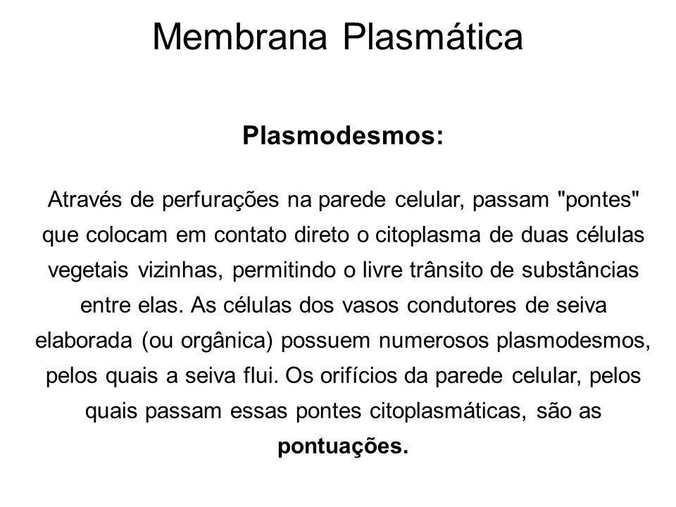 Plasmodesmos: Através de perfurações na parede celular, passam pontes que colocam em contato direto o citoplasma de duas células vegetais vizinhas, permitindo o livre trânsito de substâncias entre elas.